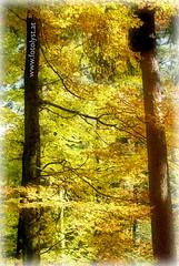 have a nice weekend ! (G.Hotz Photography (busy as a bee =)) Tags: autumn portrait people food lake photography dornbirn feldkirch sterreich stillleben foto fotograf fotografie hard bregenz gerald photograph bodensee constance bludenz oesterreich vorarlberg produkt hotz hochzeitsfotograf ondarena fotolyst