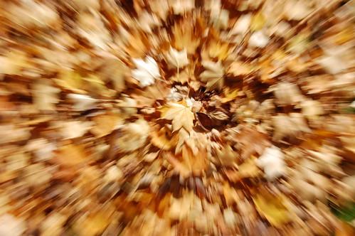 Leaf Zoom