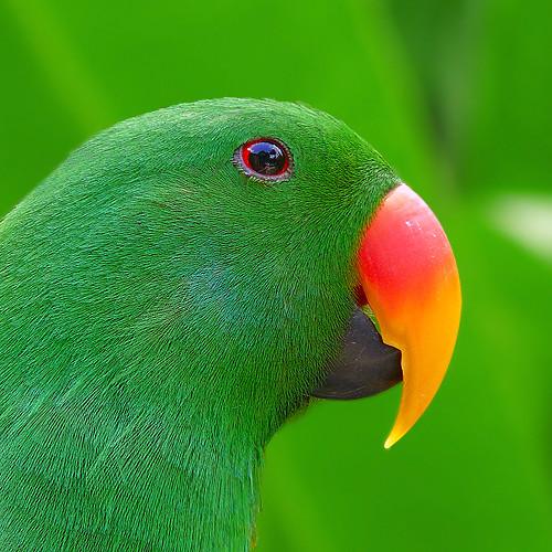 Thumb Loro: Ver de que te quiero verde