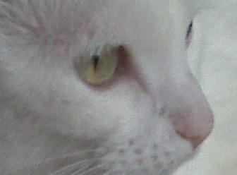 Foto di Sky, dolce gattina