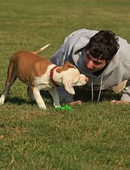 bonding (Derek Johnson | derekjohnsonvisuals.com) Tags: dog grass puppy toy pitbull blunt ari
