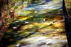 (chucknastyyy) Tags: bridge camping fall nature leaves forest moss walk
