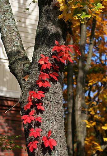 Autumn Colours 08 -4