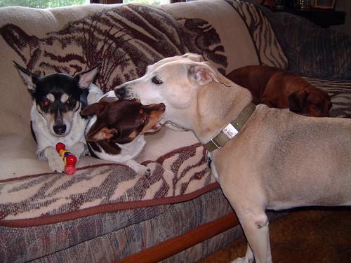 2006-07-04 - DogsDogsDogs-0036