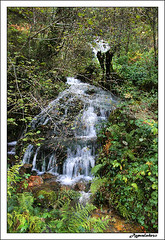 Brcena Mayor (Bosque) (agevaledeso) Tags: espaa spain rboles bosque otoo cantabria 9133 barcenamayor