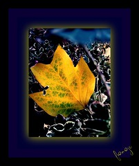 loneliness : double lack of looks (framajo) Tags: november autumn france leaf loneliness 2008 laval picnik canong7 citritbestofyours framajo