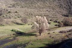Pontn de la Oliva (ram1999es) Tags: madrid naturaleza oliva ponton