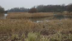 pond in the dunes (Ren Mouton) Tags: d50 coast nikon hiking dunes nederland thenetherlands nikond50 duinen castricum noordholland wandeling kust nswandeling noordhollandsduinreservaat 30112008