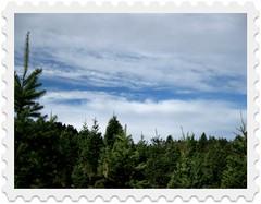 Skyline Tree Ranch, 2008