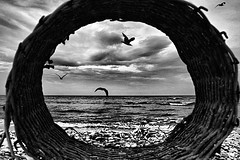 Unusual point of view (Effe.Effe) Tags: sea blackandwhite bw beach blackwhite basket seagull bn gabbiani senigallia biancoenero cesta bwdreams blackwhitephotos unusualpointofview