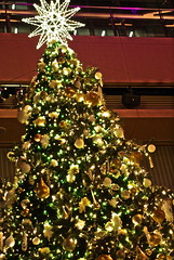 HDR tree