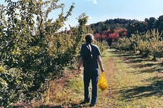 Stephen looking for good apples (leahliz) Tags: fall film shelburnefarm stephen pentaxk1000 applepicking stowema