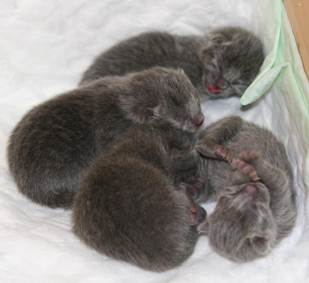 Kittens of Pegusha 3133855212_0a361d2089_b