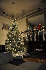 regular christmas tree