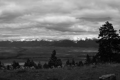 National Bison Range (USMC68) Tags: blackandwhite mountains clouds landscape wildflowers missions snowcappedmountains arrowleafbalsamroot