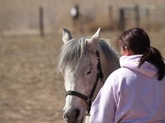 Sha Bang relaxing (lostinfog) Tags: hooftrimming march 2008 danny hoof colorado e300 shabang horse