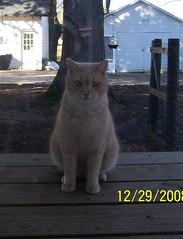 2008-12-31 (47)