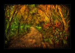 The Tunnel   (Alfredo11) Tags: trees red orange plants naturaleza verde green texture textura nature colors landscape gold golden rojo costarica plantas colours arboles camino path tunnel paisaje colores alfredo vegetation tunel tones naranja hdr vereda sendero senda dorado oro treatment tratamiento tonos 5xp theunforgettablepictures nikond300 gevetacion