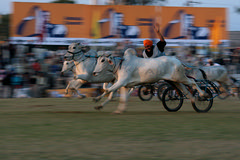 Bullock Cart Racing - Panning Shot (Ajit Pal Singh) Tags: two horses india game history sports sport festival youth rural speed photo dance war colorful village bullock action folk bare events traditional religion culture mini games racing event riding winner warrior tug olympics sikh cart punjab popular panning 2009 schedule kila sponsor bravery daredevil stunt bhangra courage gallop daring gallary ludhiana compete galloping quila footed grewal kabbadi raipur giddha kilaraipur qilaraipur