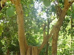 "africa 2013 496 <a style=""margin-left:10px; font-size:0.8em;"" href=""http://www.flickr.com/photos/104703188@N06/13063534173/"" target=""_blank"">@flickr</a>"