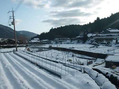 雪の大原 (56)