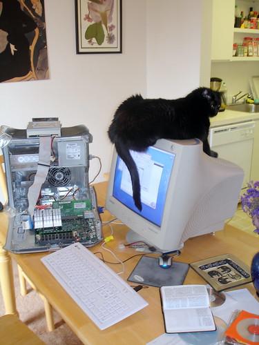 Cats Love Macs