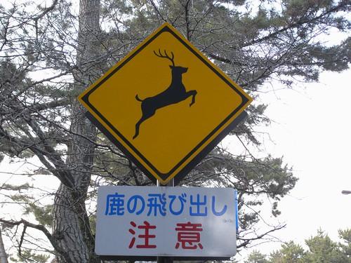 08-03-10-鹿のいる風景-03