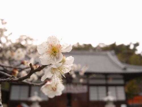 玉津島神社-09