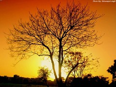 Shiwalik Park, Manimajra, Chandigarh ('HD' nature) Tags: desktop sunset red wallpaper orange sun color colour tree nature colors yellow clouds sunrise landscape evening scenery colorful colours image sony highdefinition hd hq chandigarh dsch3 manimajra shiwalikpark shivalikpark