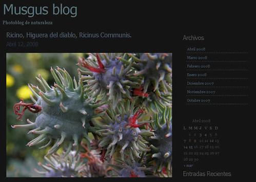 Musgus blog