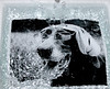 darkroom (saikiishiki) Tags: blue b portrait white black film water darkroom dark metaphoto room wash weimaraner splash runningwater pictureofapicture rinse weim bwfilm bwprint squidoo blueweimaraner traditionalphotography thelittledoglaughed chanhi weimaranerpaintingcom weimaranerart blueweim washingaprint beatnikpiknik weimaranerartist weimaranerphotography weimaranerphotographer saikiishiki