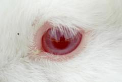 Rabit Eye by photometrist