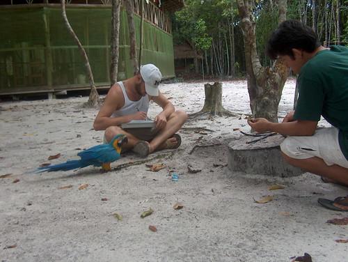 El Guacamayo comiendo