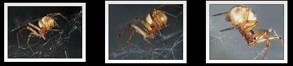 Three Panasonic TZ5 spider macro photos by scibi