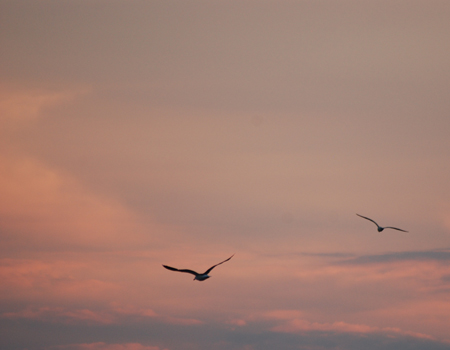 Seagulls at Dusk