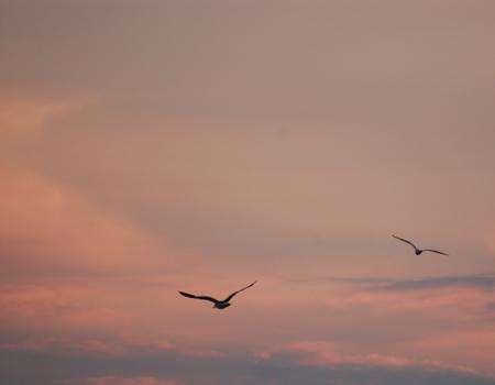 Seagulls at Dusk