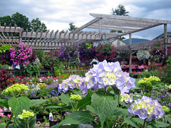 gardenshop2