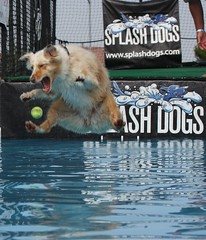 Flying Dog vs. Tennis Ball (San Diego Shooter) Tags: california wallpaper dog dogs sandiego desktopwallpaper splashdog wagsforwishes dogjumping i500 splashdogs dogintheair impressedbeauty goldstaraward animalwallpaper nathanexplore sandiegowallpaper qlifeshowmay09 sandiegodesktopwallpaper