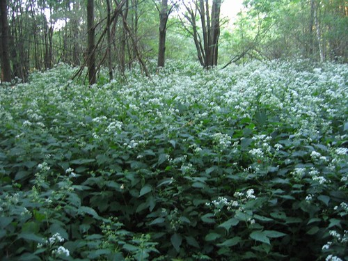 Flowers form the forest floor