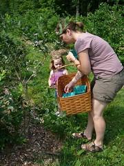 cassie and charlotte pick blueberries (alist) Tags: alist dublinnh charlottelasky cassiecleverly alicerobison july2008 ajrobison