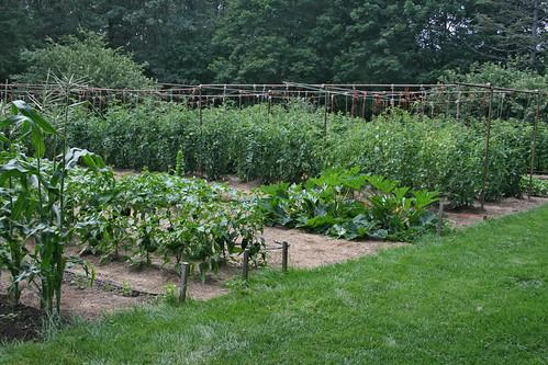 tom's garden 2