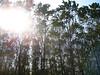 filari nel sole