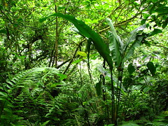Jungle (Costa Rica Dcouverte) Tags: costarica corcovado jungle tortuguero arenal