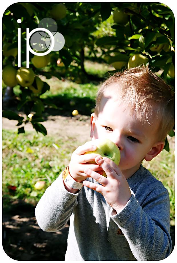 Klackle's Orchard - 2008