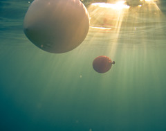 Cool Balloons Underwater by javiy