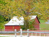 Sycamore Tree and Barn (chippewabear) Tags: red tree fall field barn farm farming indiana sycamore redbarn sycamoretree morganco goldstaraward
