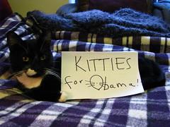 Kitties for Obama (Uncle Catherine) Tags: politics kitties 2008 obama 08 barackobama 2008presidentialelection phrixus politicats kittiesforobama