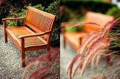 Bench (isayx3) Tags: bench 50mm nikon diptych warm bokeh f14 tones d3 challengeyouwinner