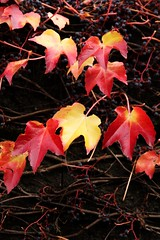 colorfallleaves2