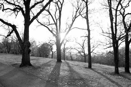 Treeward Bound
